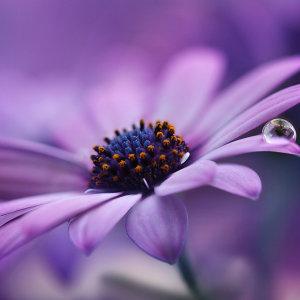 moje oblúbené kvety :-)
