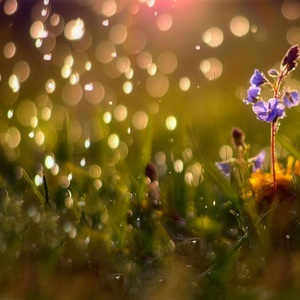 V kvapkách dažďa..