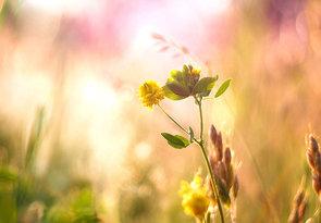 ... keď slnko lúčmi čanká lúčku