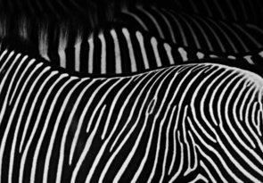 prúžky, čiarky, zebričky