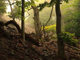 V letnom lese