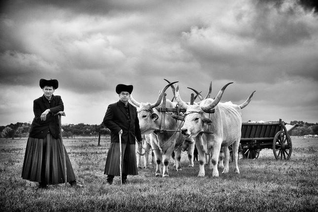 Pastiery z Hortobagy