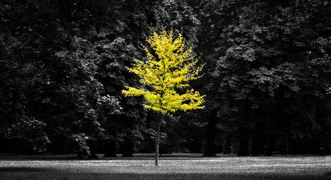 alone in color