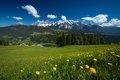 Jarné alpské lúky