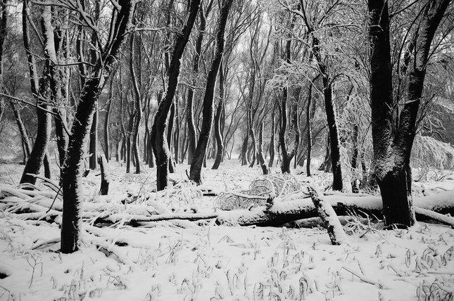 Les ako mám rád