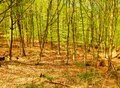 Na potulkách lesom