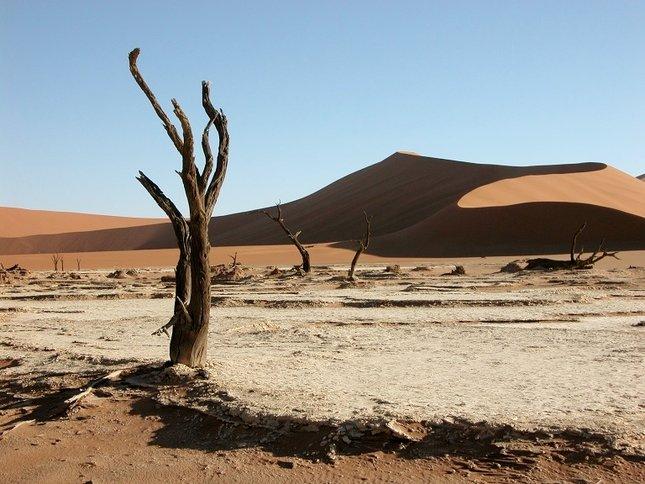 Poézia púšte