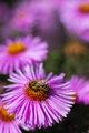 Usilovná včielka