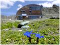 Stüdlhütte am Großglockner 2802 müA
