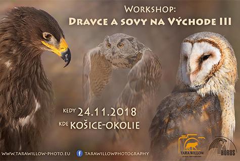 Workshop: Dravce a sovy na Východe 3