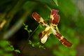 Orchideja 2