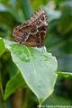 Jednoducho motyl