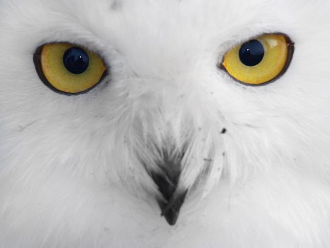 ...z očí do očí...