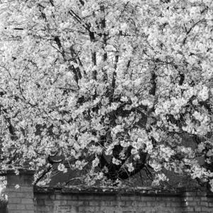 Jar v meste