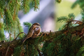 Vrabec na sídlisku
