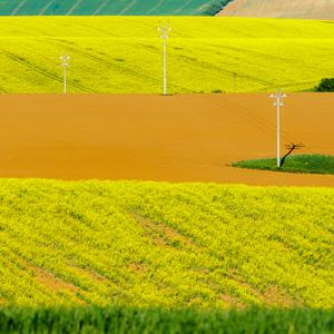 Repkové pole