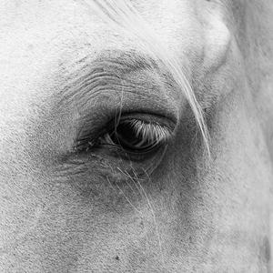 Pohľad koňa