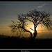 Dancing tree