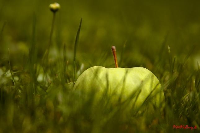 zelené jabĺčko