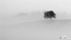V zajatí hmly