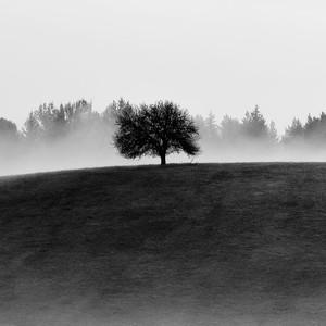Jesenné ráno II.