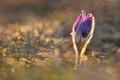 V zlatej jari