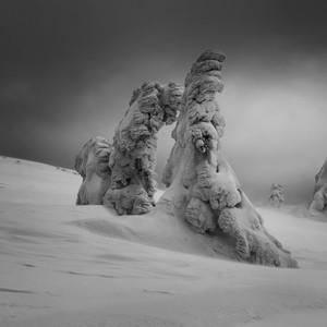 Zimné kreatúry