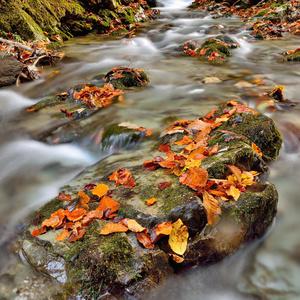 Farebný potok