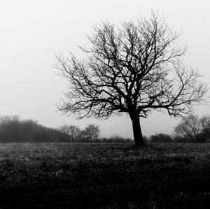 "Jesenné ""mlhy"""