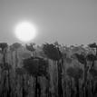 Strážcovia slnka