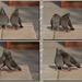 Pigeon's story/ Holubý príbeh