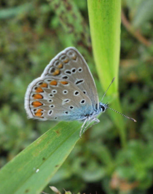 makro - motýľ