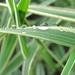 kvapky dažda