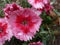 Vodny kvet