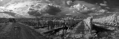Račianske vinohrady