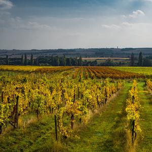 Doľanské vinice