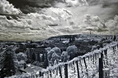 pohlad zo Svätováclavské vinice