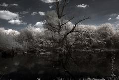 Šurská prírodná rezervácia
