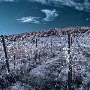 Kraj dobrého vína
