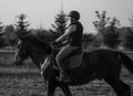 jazdec a koník
