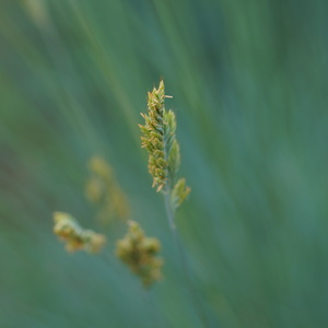 Makro trávy