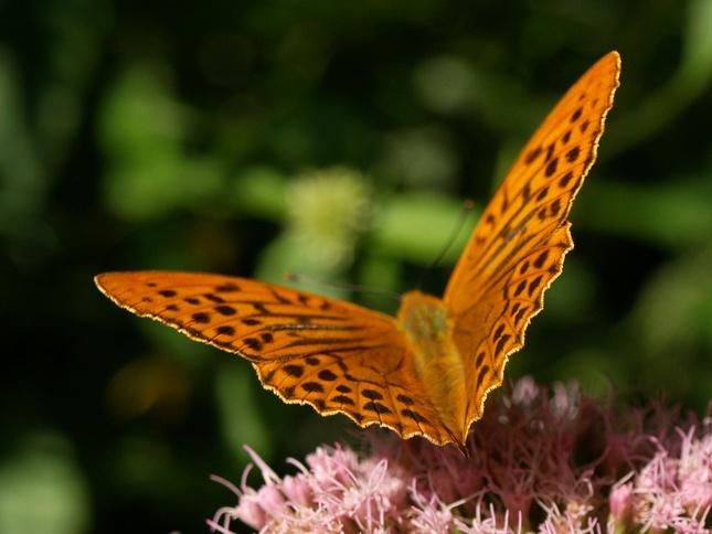 Mávnutie motýlích krídiel
