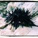 morsky jezko