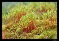 Krajinka z machu