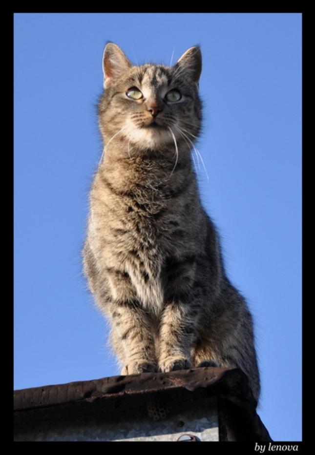 Sedím na streche a je mi dobre