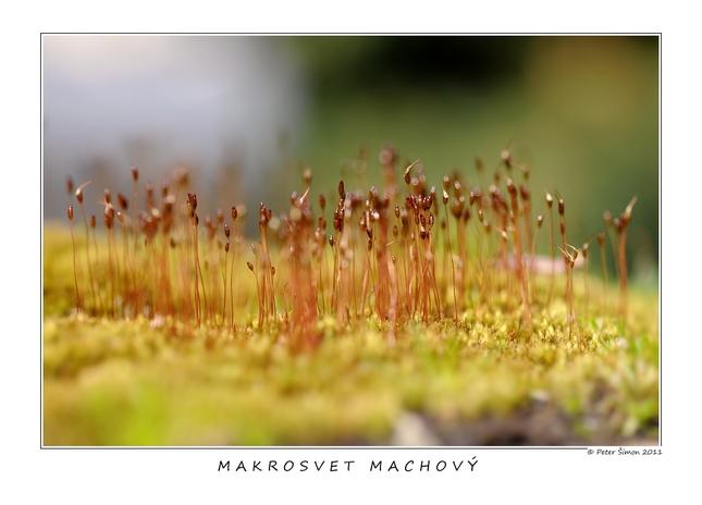 makrosvet machový