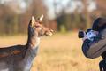 Wildlife - portrét