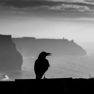 Cliff Of Moher a havran