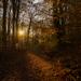 lesnym chodnikom