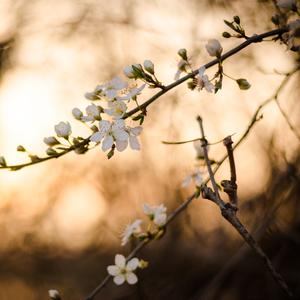 Jarný západ